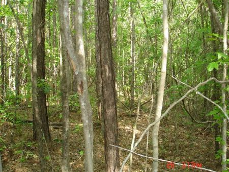 10 Acres : Ackerman : Choctaw County : Mississippi