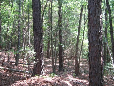 101 Acre Recreational Tract : Sharon : Chester County : South Carolina