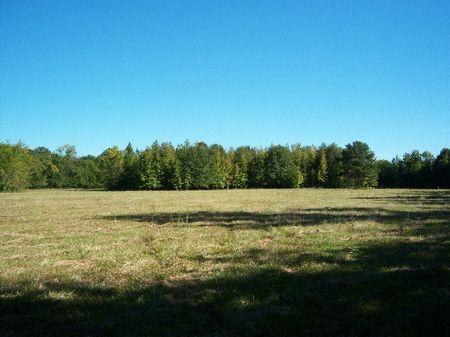 38.5 Acres : Collirene : Lowndes County : Alabama