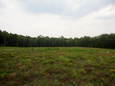 155 Acres Of Hardwoods, And Creeks : Sparta : Hancock County : Georgia