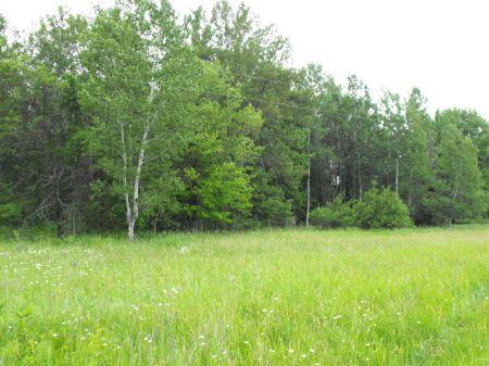 50 Acres On Long Lake Rd : Cheboygan : Michigan