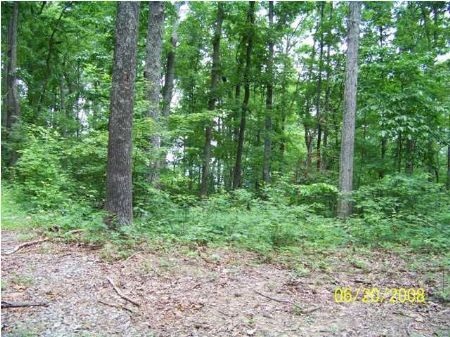 55 Acres Near Kimball, Tn : South Pittsburg : Marion County : Tennessee