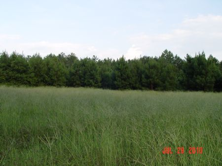 138 Acres Monroeville (craven) : Monroeville : Monroe County : Alabama