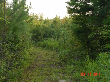 44 Acres Near Alabama State Lake : Beatrice : Monroe County : Alabama