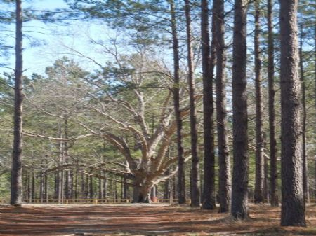 391 Acres Wolfe Creek - Sold : Cobbtown : Candler County : Georgia