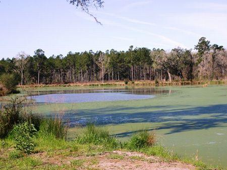 Two Beard Farm : Monticello : Jefferson County : Florida