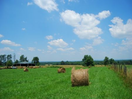 168 Acre Farm Near Gaffney : Gaffney : Cherokee County : South Carolina