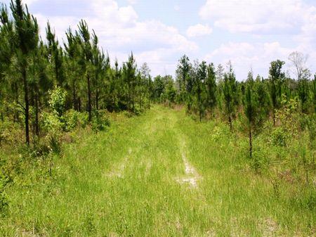 Harrison Farm : Woodville : Leon County : Florida