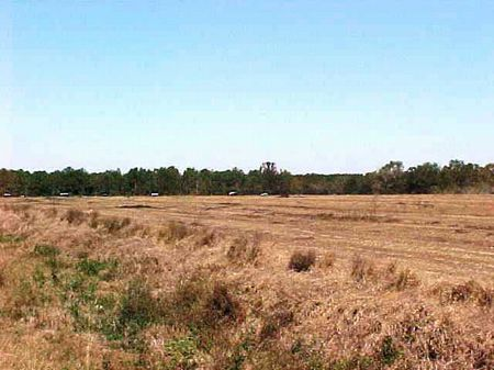Development Tract near Slocomb : Slocomb : Geneva County : Alabama