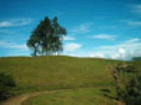 Cattle Farm, 52 Hectares, 128 Acres : Turrialba : Costa Rica