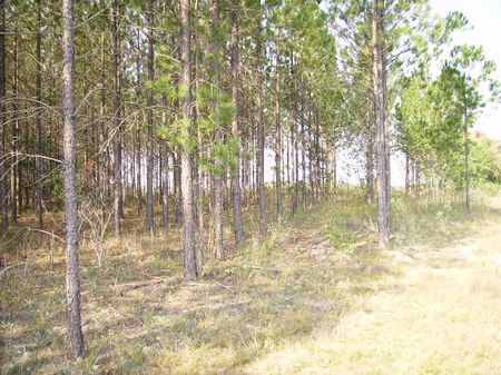 Great Hunting and Timber Tract : Dublin : Laurens County : Georgia