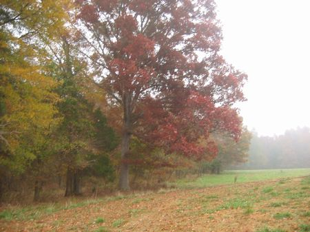 Spectacular Pasture Land-Silk Hope : Siler City : Chatham County : North Carolina