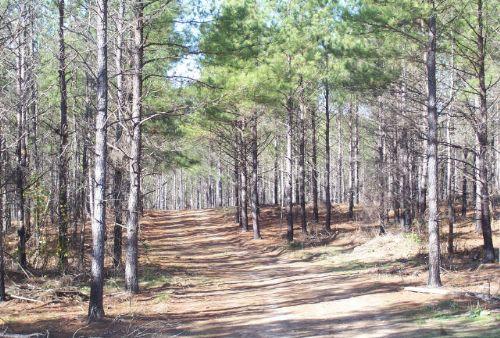 Timber / Recreational Land : Lexington : Oglethorpe County : Georgia