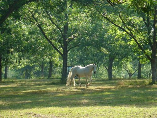 80 Acres : Hurtsboro : Russell County : Alabama