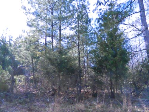 84.3 Acre Hunting Tract : Carlton : Oglethorpe County : Georgia
