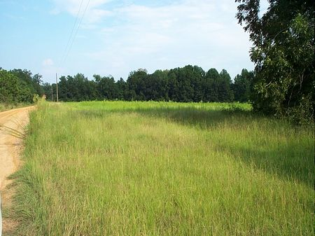 Beautiful Acreage With Pond : Swainsboro  : Emanuel County : Georgia