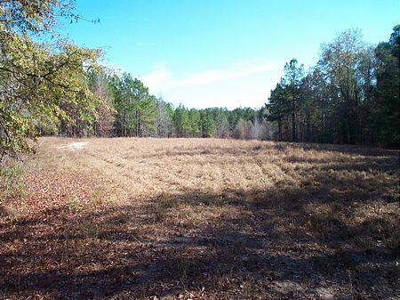 64 Acres - Fantastic Hunting : Swainsboro  : Emanuel County : Georgia