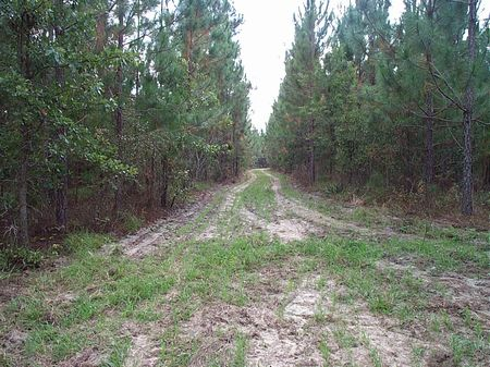 224 Acre Timber Tract : Swainsboro  : Emanuel County : Georgia