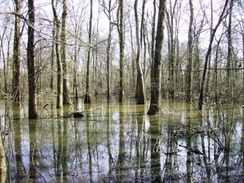 40 +/- Acres On Big Creek : Popular Grove : Phillips County : Arkansas