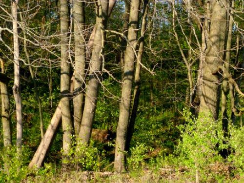 68 Acres With Spectacular Hardwoods : Primrose : Dane County : Wisconsin