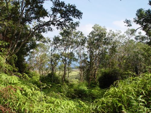1000 Acres 4 Mil : Papaloa : Hawaii County : Hawaii