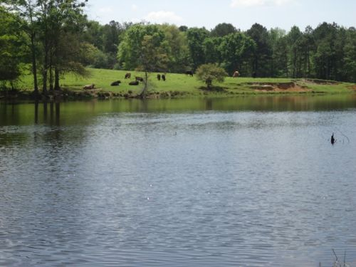 60 +/- Acres In Jack, Al : Jack : Coffee County : Alabama