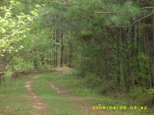 45 +/- Acres In Troy, Al : Troy : Pike County : Alabama
