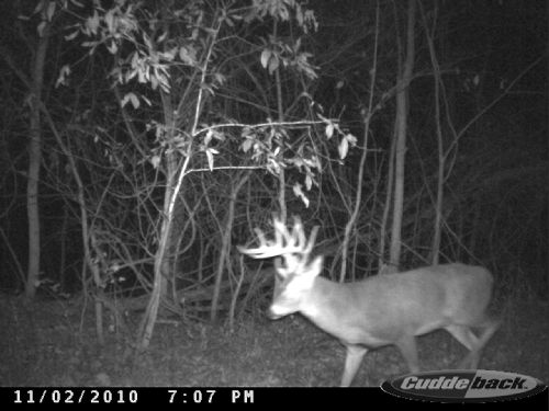 275.4 Acres, Big Timber, Huge Bucks : Valley City : Pike County : Illinois