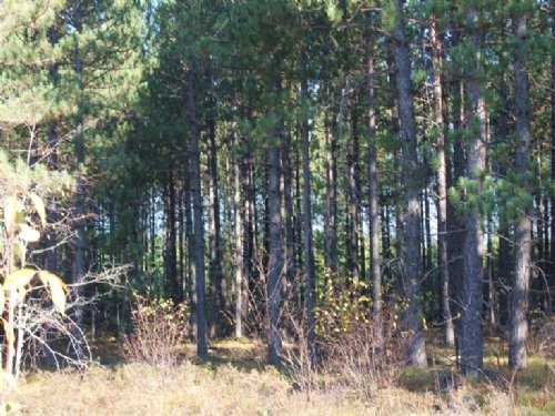 Tbd Missouri Road  Mls #1076637 : Gwinn : Marquette County : Michigan