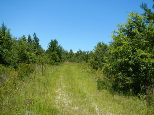 253 Acres Bank Owned Highway Front : Waynesville : Brantley County : Georgia