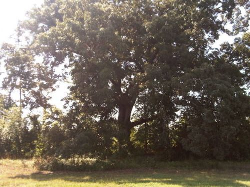 Spectacular Tract : Johnston : Saluda County : South Carolina