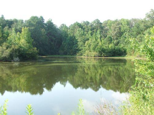 Kingfisher Tract- 33 Acres : Greensboro : Hale County : Alabama