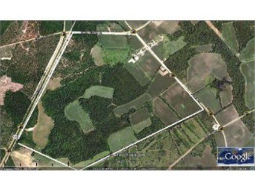 Perfect Balance: Pines, Hardwoods : Pinewood : Sumter County : South Carolina