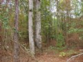 Beautiful 188 Acre Hunting Tract : Butler : Taylor County : Georgia