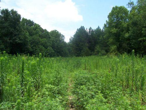 Farmland : Pendergrass : Jackson County : Georgia