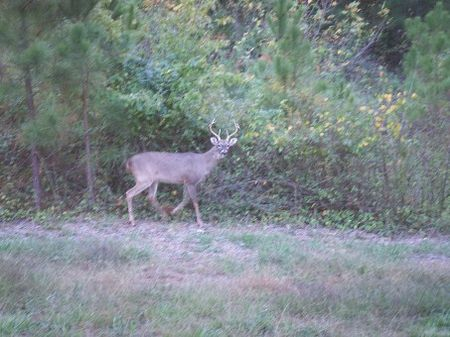 175 Acre Hunting Ranch Land Only $2 : Perry : Taylor County : Florida