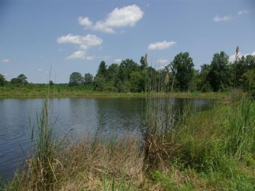 15 Ac Tract On 20 Acre Lake : Ashville : St. Clair County : Alabama
