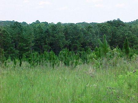Richland Creek : Richalnd Creek : Pike County : Alabama