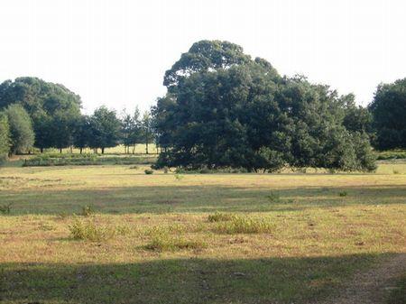 Catlle Farm : Bainbridge : Decatur County : Georgia