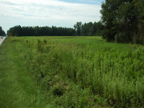 Beautiful Homesite Near Lumberton : Lumberton : Robeson County : North Carolina