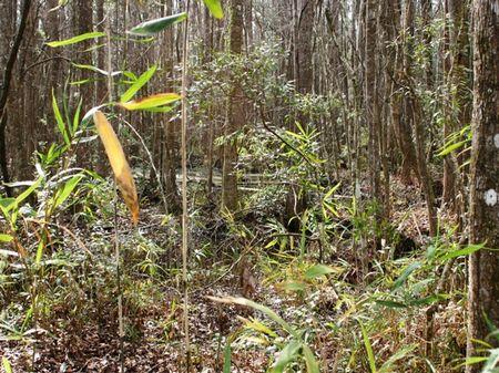 Rosey Farm : Monticello : Jefferson County : Florida