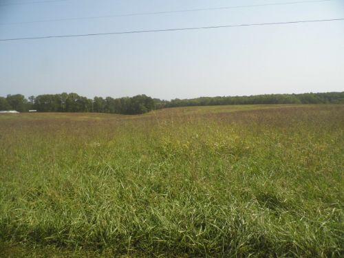 Austin's Pasture : Buckingham : Virginia