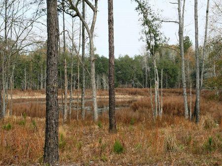 Indian Lake Plantation : Sneads : Jackson County : Florida