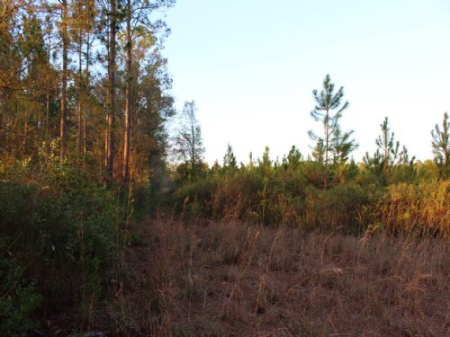 39 Acres Lot 9 Tall Pines : Starke : Bradford County : Florida