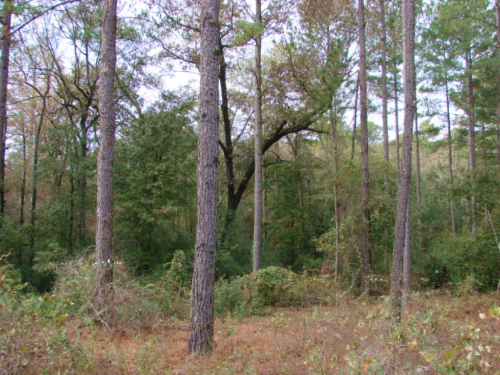 671 Acre Timber Investment Tract : Butler : Taylor County : Georgia