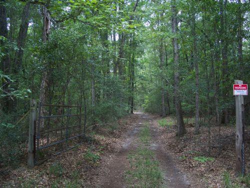 74 Acre Isolated Cabin Timberland : Omaha : Stewart County : Georgia