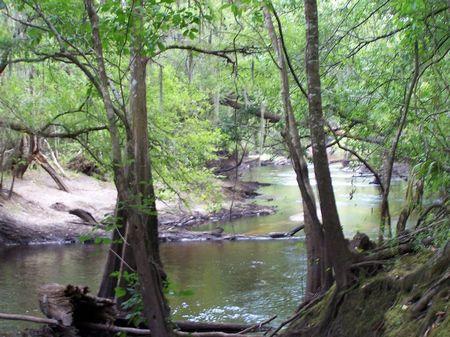 Yemassee - 229 Acres On Combahee : Yemassee : Hampton County : South Carolina
