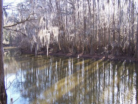 Coastal Tract - 521 Acres On River : Allendale : Allendale County : South Carolina