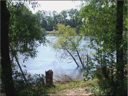 3512 Acres On Savannah River : Newington : Screven County : Georgia