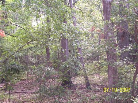 330 Acre Hunting And Timber Tract : Attapulgus : Decatur County : Georgia